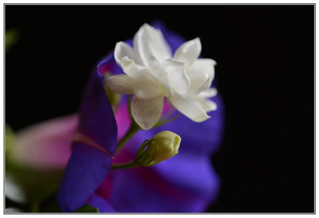 好一朵美丽的茉莉花?(remix)