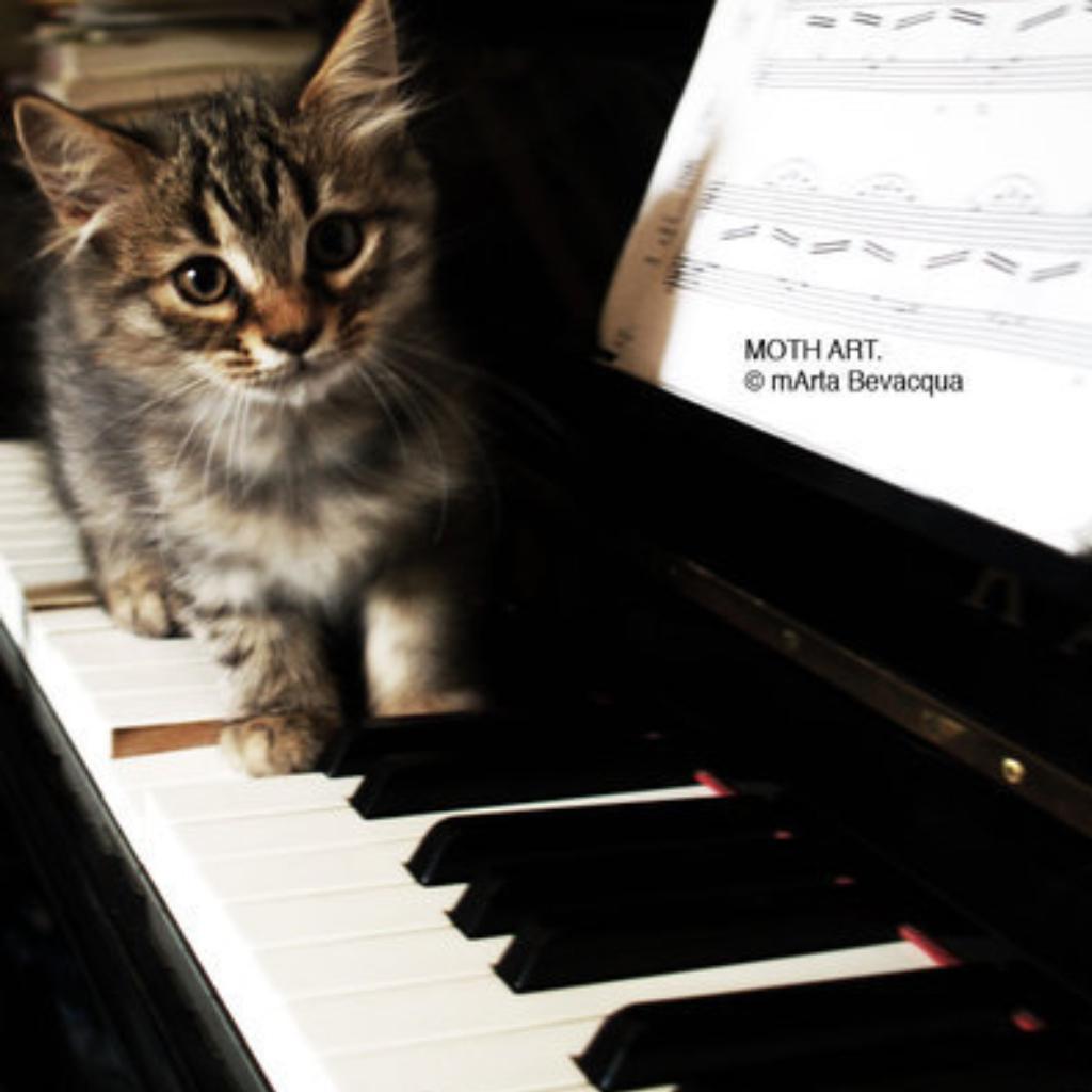 爱上钢琴纯音乐