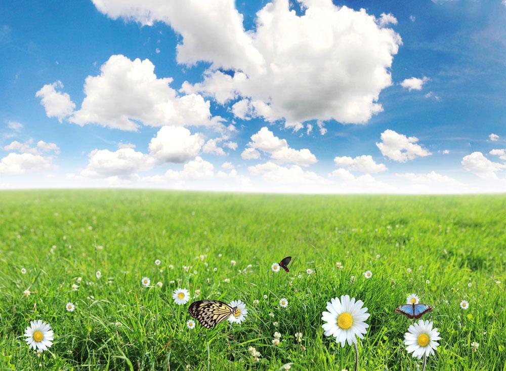 草原图片风景区蓝天