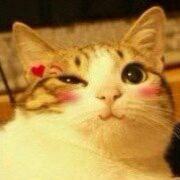 猫酱家的喵图片